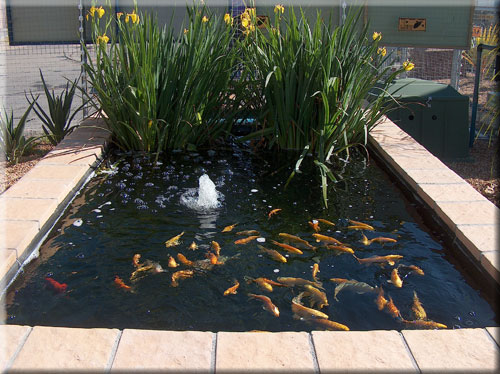 Fibreglass koi ponds pools with jets cape town for Koi pond jets